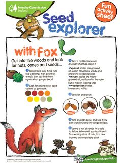 get kids outside searching for nuts, cones and seeds / sweet activity sheet / forest commission england Forest School Activities, Nature Activities, Learning Activities, Activities For Kids, Outdoor Education, Outdoor Learning, Outdoor School, Outdoor Classroom, Tot School