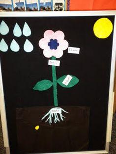 Simple factual flannel board idea for Plants Theme!