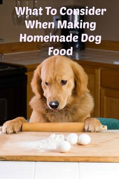 Planning on trying a few dog food recipes? Before you start, check out what to consider when making homemade dog food to make sure it's as safe as possible.