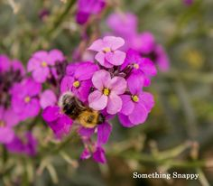 Nature photography. Purple Flowers and a bee