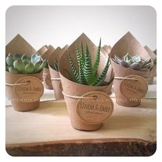 use white confetti cone + name tags Wedding Favours, Wedding Gifts, Succulent Favors, Wedding Giveaways, Craft Markets, Cactus Y Suculentas, Indoor Wedding, Thank You Gifts, Diy Christmas Gifts
