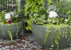 water garden container