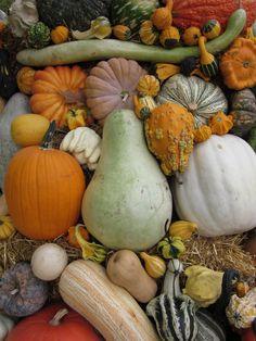 Pumpkins, gourds, squash....love them all    www.helensdaughtersstudio.blogspot.com