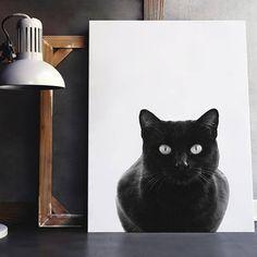 Arte moderna nature inspirational wall art cat black work