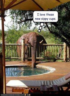 http://africageographic.com/safari/#5/1