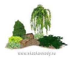 Картинки по запросу композиции из древесных растений угловые