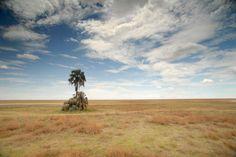 Liuwa Plains, Zambia (photo by Dale Morris)