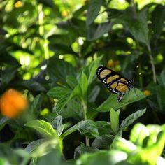 Butterfly Registro em Jardim Botânico de Curitiba