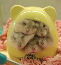 Lol! Hamster house!