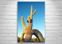 Arizona Cactus Art, American Desert Photography, Desert Art, Southwest Art, Tucson Picture, Sunset Prints, Ironwood Forest, Wall Art