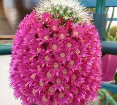 Una mamiliaria cubierta y engalanada con flores