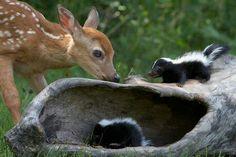 Deer and skunks = Scuppy & Pepper