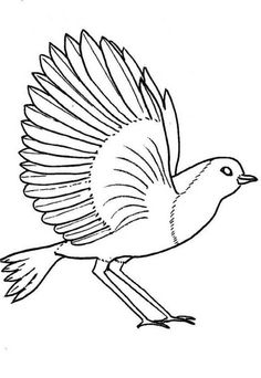 Bird Coloring Pages How to Draw a Flying Bird How to