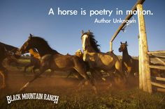A Horse Is Poetry In Motion. #BLACKMOUNTAINRANCH