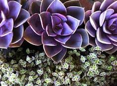 succulent flower bouquets mauve and teal - Google Search