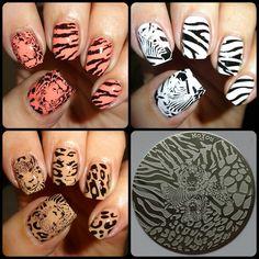 Wendy's Delights: MoYou Nails Stamping Plate 303 - Safari.  20% OFF USE WENDYSP @moyounails #safari #wild #stamping #nailart #tiger #leopard #zebra