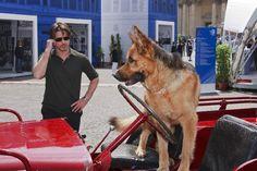 German Tv Shows, T Rex, Tumblr, Animals, German Shepherds, Image, Photos, German Language, Animales