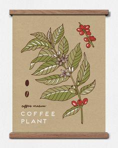 Impresión de pantalla de la planta del café botánico 11 x 14