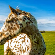 Click to finish the interactive case study. Case Study, Manual, Horses, Animals, Animales, Textbook, Animaux, Animal, Animais