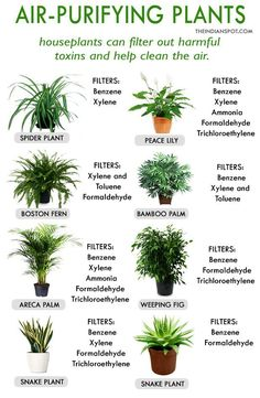 good house plants for clean air * plants good for air & plants good for air quality & plants good for air houseplant & good house plants for clean air & good air plants & indoor plants good for air & good air purifying plants & house plants good for air Plantas Indoor, Decoration Plante, Inside Plants, Spider Plants, Good House, House To Home, Houseplants, Garden Plants, Herb Garden Indoor