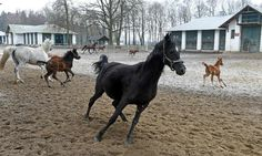Spate of sackings at state-run enterprises have endangered the reputation of Poland's globally revered horsebreeding industry