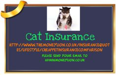 http://www.themoneylion.co.uk/insurancequotes/lifestyle/cheappetinsurancecomparison cat insurance