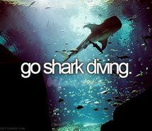 Inspiring image before i die, blog, blue, bucket list, diving, lov, perfectbucketlist, scary, sea, shark, sharks, summer, text, typography #317535 - Resolution 500x320px - Find the image to your taste