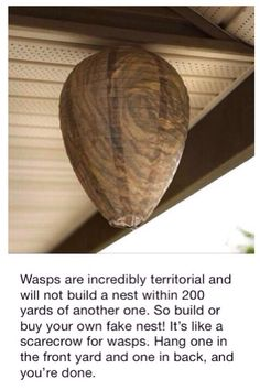 Faux Wasp Nest ,but do they really work?- All-Natural Wasp Deterrent Simple Life Hacks, Useful Life Hacks, Wasp Deterrent, Wasp Repellent, Wasp Nest, Tips & Tricks, Home Hacks, Pest Control, Bug Control