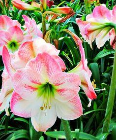 Epcot Flower & Garden Fest