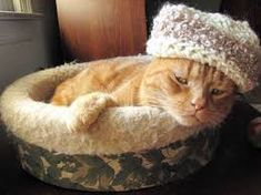 How Cats Benefit from Wearing Clothes Beanie, Cats, How To Wear, Animals, Clothes, Image, Benefit, Outfits, Gatos