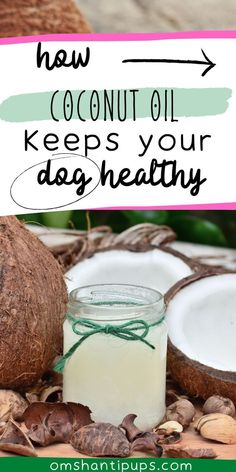 """Coconut oil is considered a """"superfood"""" that has several positive effects not only on humans' health but also for our dogs. Superfoods come loaded with several essential nutrients good for our overall health and well-being. So, let's find out how you can use this wonderful supplement to take care of the health of your fur buddy! Coconut Oil For Dogs, Coconut Oil Pulling, Coconut Oil Uses, Natural Skin Moisturizer, Coconut Water Benefits, Heartburn During Pregnancy, Home Remedies For Heartburn, Dog Health Tips, Pet Health"""