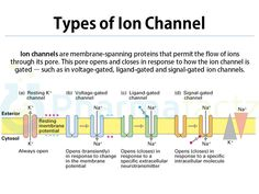ion channels types - Google Search