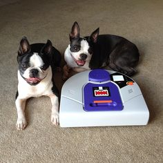 Neato Robot Vacuum Cleaner Review - okay so kevinandamanda.com 's dogs are pretty cute too and I'd love to have them, but I am posting the COOOOL vacuum she showed us on her blog, way too cool and I SO want it! :)