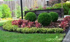 Ogródek Agam - strona 189 - Forum ogrodnicze - Ogrodowisko