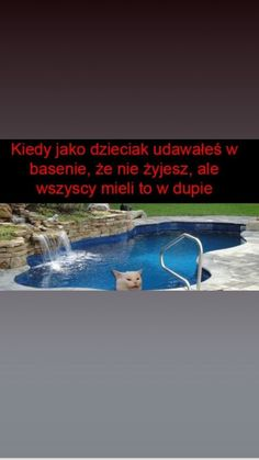 Polish Memes, Pokemon, True Memes, Wtf Funny, Best Memes, Have Time, Haha, In This Moment, Humor