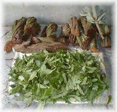 peruvian healers - Bing Images