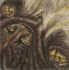 Title:  Demille The Pug   Artist:  Lisa Marie Szkolnik   Medium:  Drawing - Colored Pencil On Paper