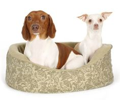 Introducing two dogs must be done slowly and carefully. Check out these must have tips!