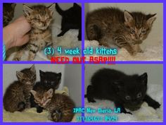 3 kittens | Other - YouCaring.com