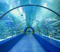 #aquarium #antalya