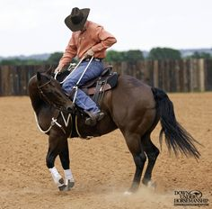 Riding Exercise Yield the Hindquarters From a Standstill Goal: To be able… Horse Gear, My Horse, Horse Riding, Haflinger Horse, Reining Horses, Cute Horses, Beautiful Horses, Horse Exercises, Horse Training Tips