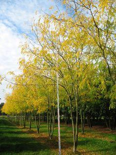 Advice on everything gardening Garden Shrubs, Garden Trees, Garden Plants, Luxury Garden Furniture, Baumgarten, Pocket Park, Landscaping Trees, Rustic Gardens, Outdoor Living Areas