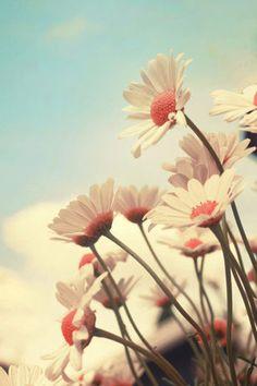 A pesar de mis alergias... me encantan las flores!