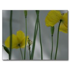 Poppies & shade (9) postcards