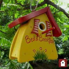 Such a sunny place for baby birds to grow up in!
