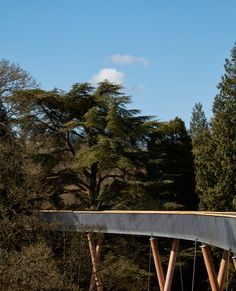 The longest treetop walkway in the UK has opened to the public in the National Arboretum at Westonbirt, designed by Glenn Howells Architects with engineers Buro Happold. The STIHL Treetop Walkway starts and finishes on ground level using the topography British Architecture, Landscape Architecture, Landscape Design, Bridge Design, Pedestrian Bridge, Uk Photos, Tree Tops, Walkway, Pathways