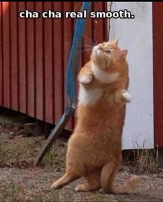 So I'm not really all into cat pictures...but really! This is like me dancing :)