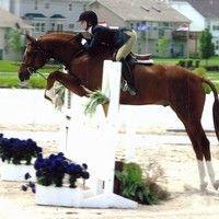 Charlot Farms Elite Warmblood Stallions Horse Breeders Hunter Jumper Dressage Horses for Sale Dressage Horses For Sale, Barn Renovation, Hunter Jumper, Hunters, Farms, North America, Animals, Homesteads, Animales