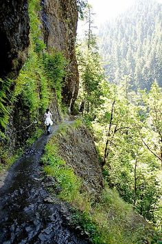 Hiking trail at Eagle Creek, Oregon! - Explore the World with Travel Nerd Nici, one Country at a Time. http://TravelNerdNici.com