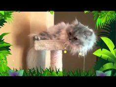 Romeo ed il suo trono - Romeo and his throne #YouTube